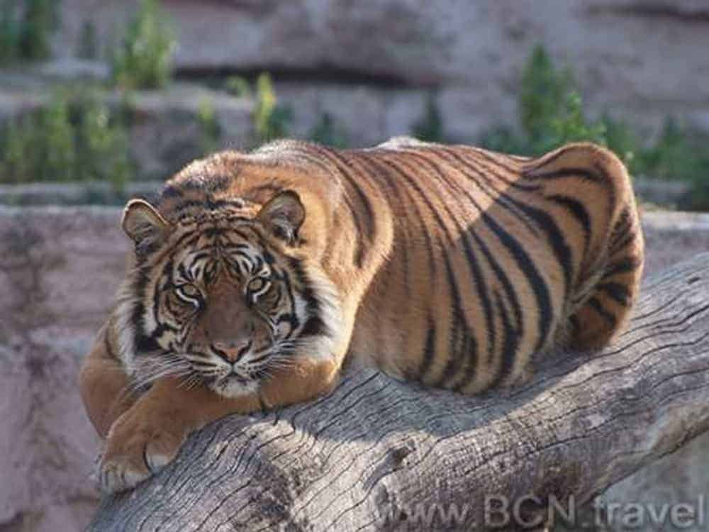 Barcelona Zoo 8res