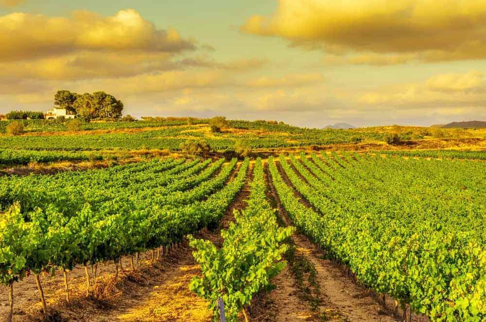 Montserrat Food Wine Tour 3 1