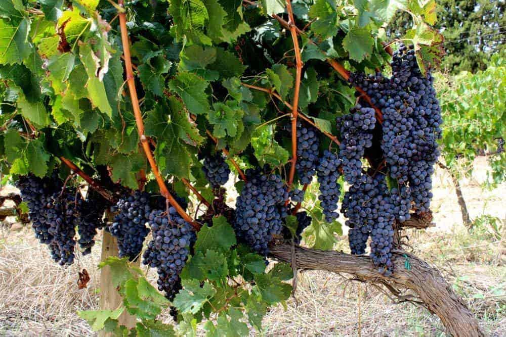 Penedes Wine Tour 3 1