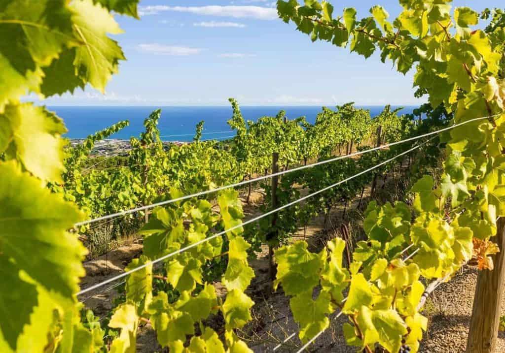 Ebike Beach Wine 1 1