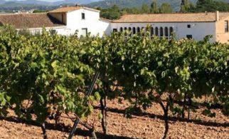 Montserrat & Cava kleine Gruppe Tour 5res