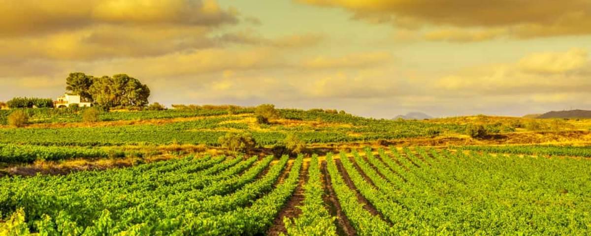 Montserrat Food Wine Tour 25 10