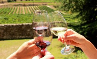 Penedes Wine Tour 1