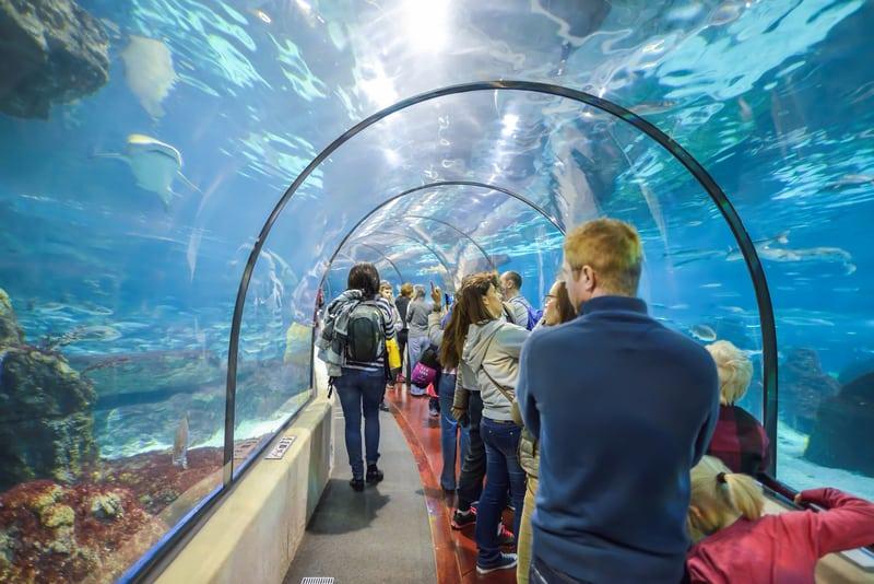 Aquarium Tunnel In Laquarium Barcelona