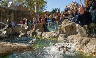 Barcelona Zoo Feeding