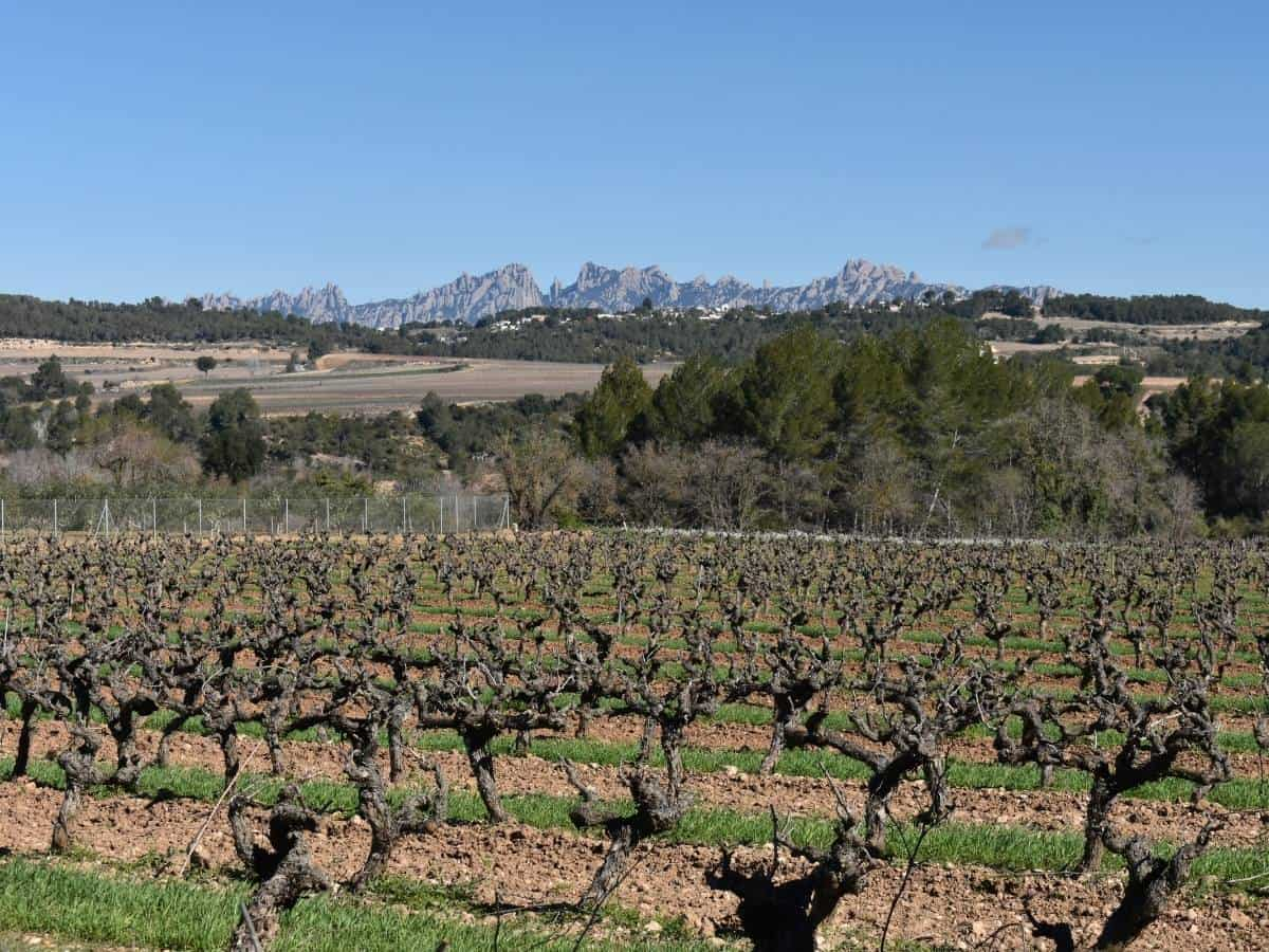 Montserrat And Wine