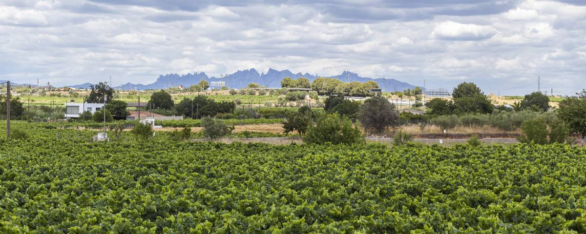 Montserrat Cava 25 10