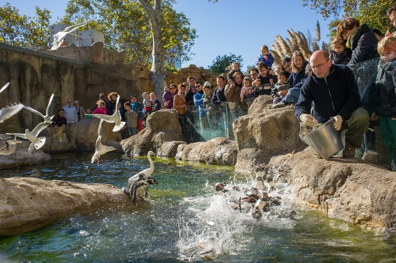 People Feeding The Penguins In Barcelona Zoo