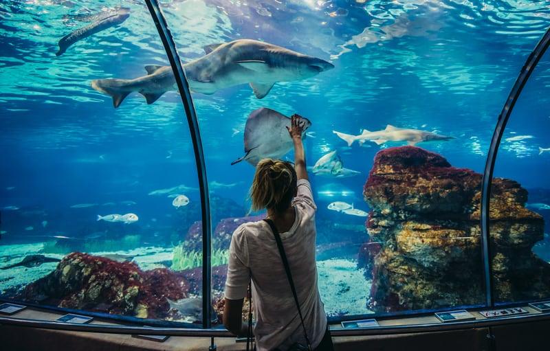 Túnel submarino de tanques marinos en L'Aquarium Barcelona